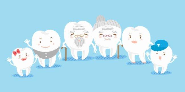 Family Dentistry. Family of Teeth